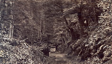 Photographs of Cook's Monument, Fern Tree Bower, Mount