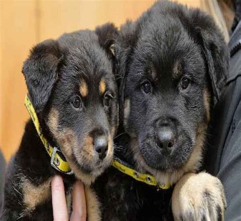 Staff At Dogs Trust 'Dumbfounded' Over Size Of 11 Week Old