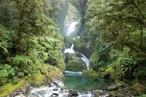 Milford Track – Travel guide at Wikivoyage