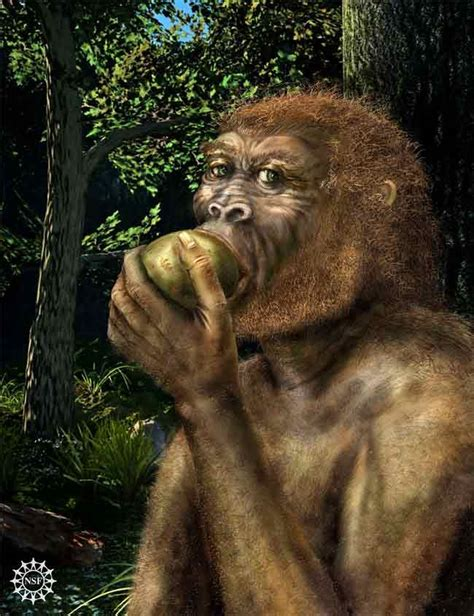 Top 10 Mysteries of the First Humans   Live Science