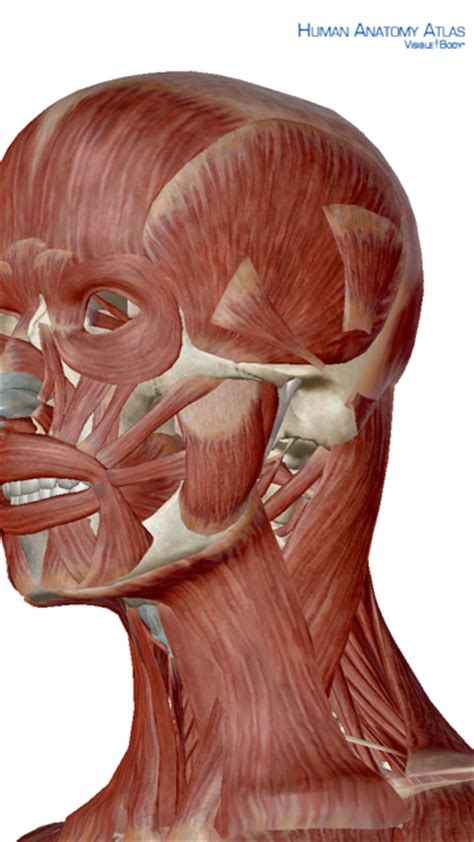 Q&A: Why does jaw tension make my neck hurt? — Rachel