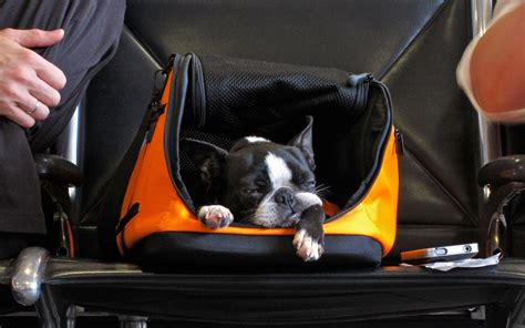 Delta's New Rules For Flying with Pets   Travel + Leisure